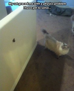 funny-cat-house-physics-problems