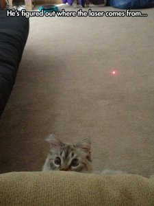 funny-cat-kitty-laser-eyes-red-dot