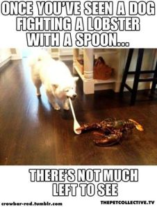 dog spoon lobster