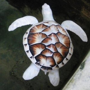 funny-turtle-sea-white-zoo-water