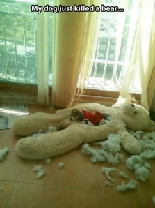 funny-teddy-bear-dog-cotton
