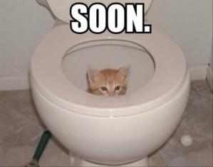 cat-in-the-toilet-soon-meme