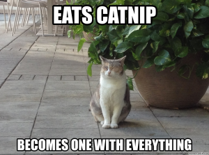 Catnip High