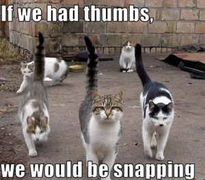 snapping cats